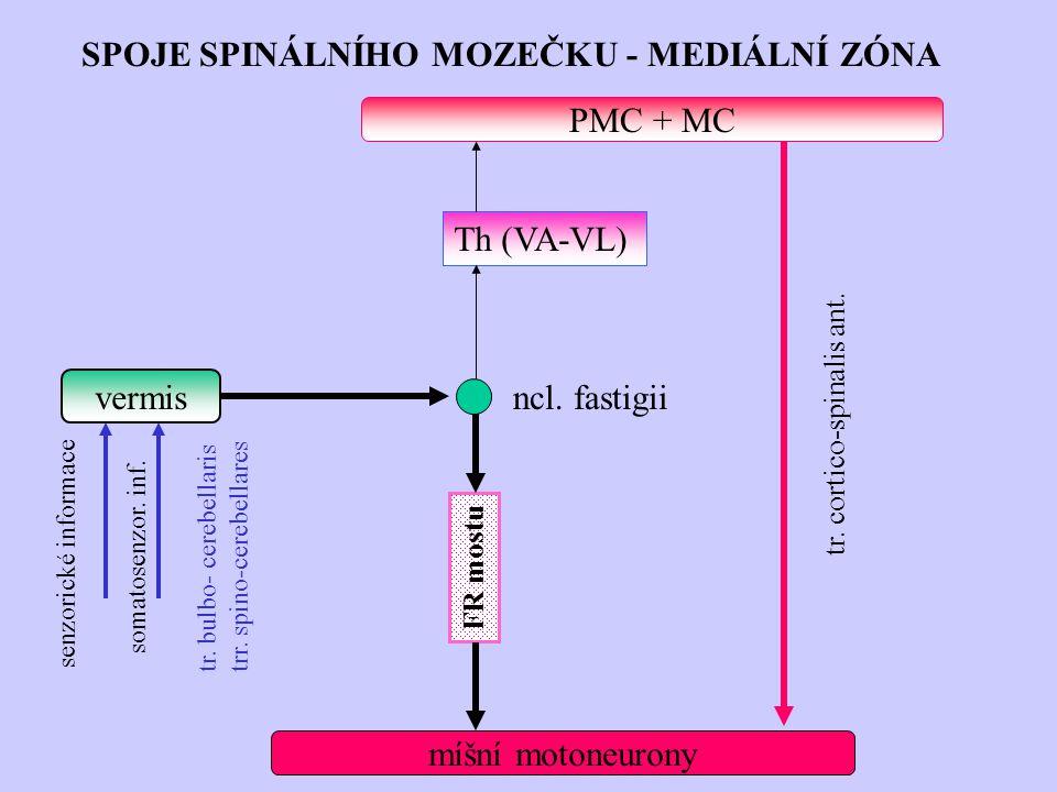 SPOJE SPINÁLNÍHO MOZEČKU - MEDIÁLNÍ ZÓNA vermis míšní motoneurony PMC + MC senzorické informace somatosenzor. inf. tr. bulbo- cerebellaris trr. spino-