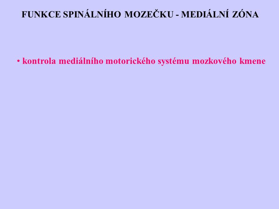 FUNKCE SPINÁLNÍHO MOZEČKU - MEDIÁLNÍ ZÓNA kontrola mediálního motorického systému mozkového kmene