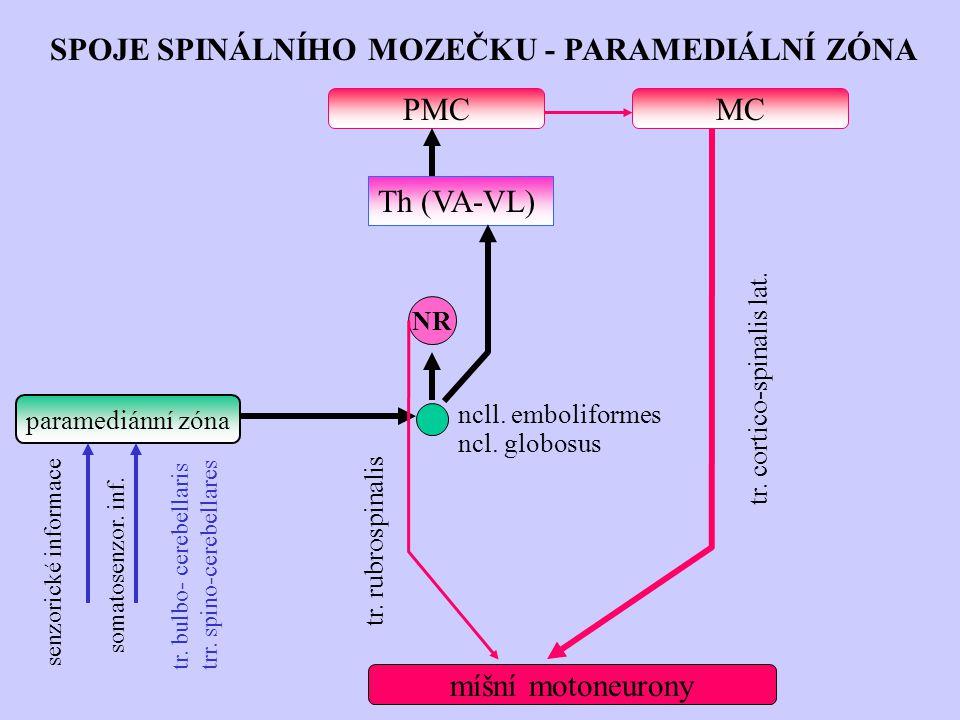 SPOJE SPINÁLNÍHO MOZEČKU - PARAMEDIÁLNÍ ZÓNA tr. cortico-spinalis lat. senzorické informace somatosenzor. inf. tr. bulbo- cerebellaris trr. spino-cere