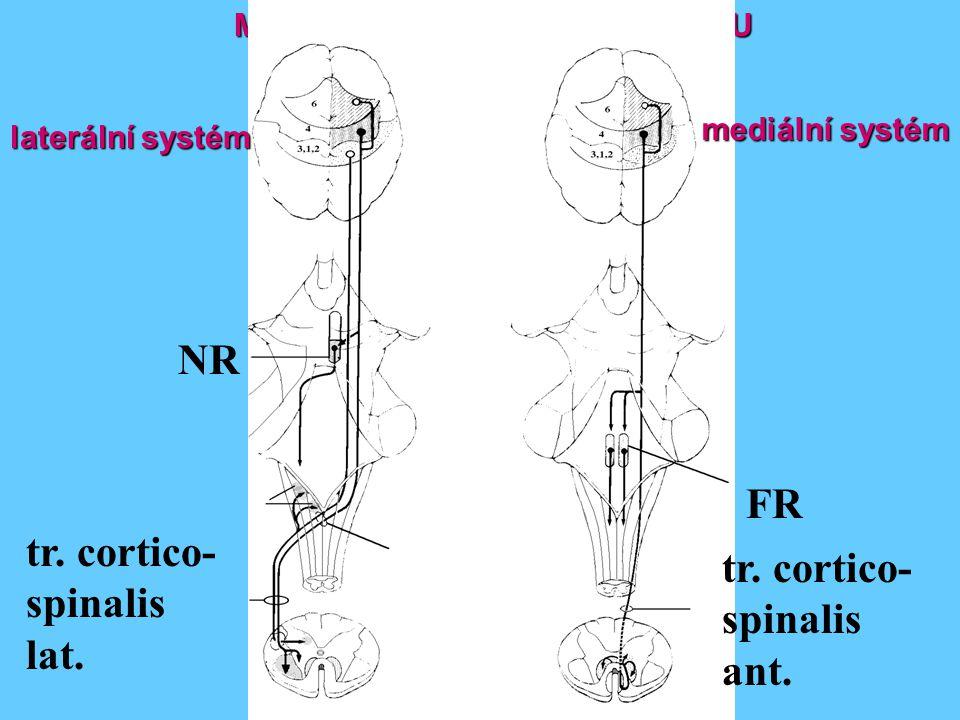 MOTORICKÉ SYSTÉMY KORTEXU NR tr. cortico- spinalis lat. tr. cortico- spinalis ant. FR mediální systém laterální systém