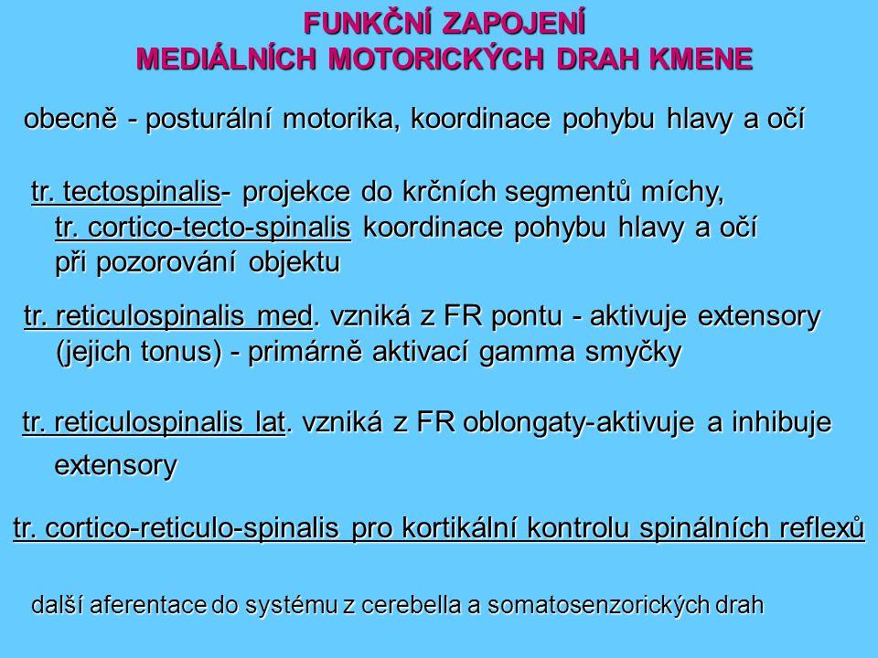FUNKČNÍ ZAPOJENÍ MEDIÁLNÍCH MOTORICKÝCH DRAH KMENE trr.