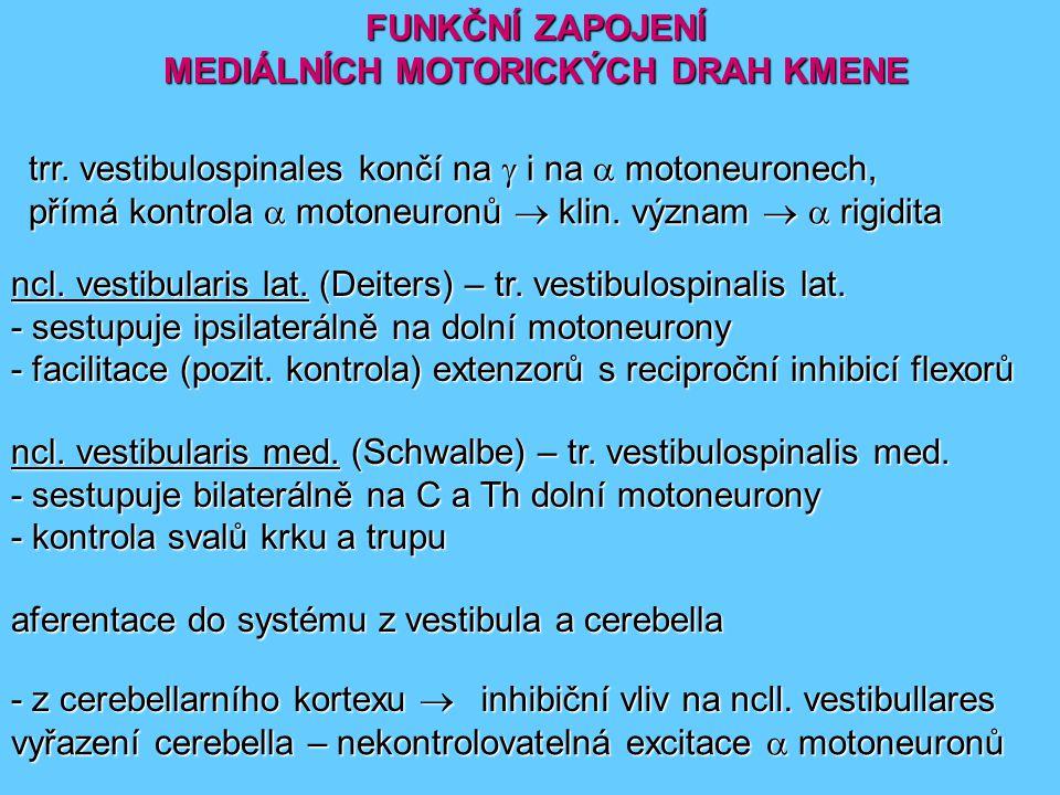 FUNKČNÍ ZAPOJENÍ MEDIÁLNÍCH MOTORICKÝCH DRAH KMENE trr. vestibulospinales končí na  i na  motoneuronech, přímá kontrola  motoneuronů  klin. význam