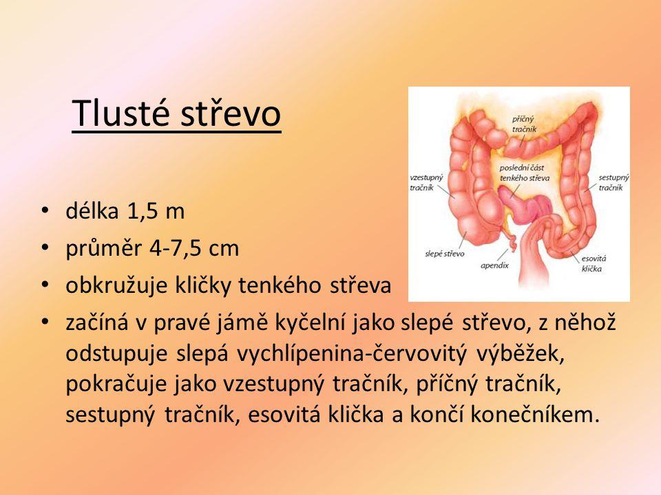 Tlusté střevo délka 1,5 m průměr 4-7,5 cm obkružuje kličky tenkého střeva začíná v pravé jámě kyčelní jako slepé střevo, z něhož odstupuje slepá vychlípenina-červovitý výběžek, pokračuje jako vzestupný tračník, příčný tračník, sestupný tračník, esovitá klička a končí konečníkem.