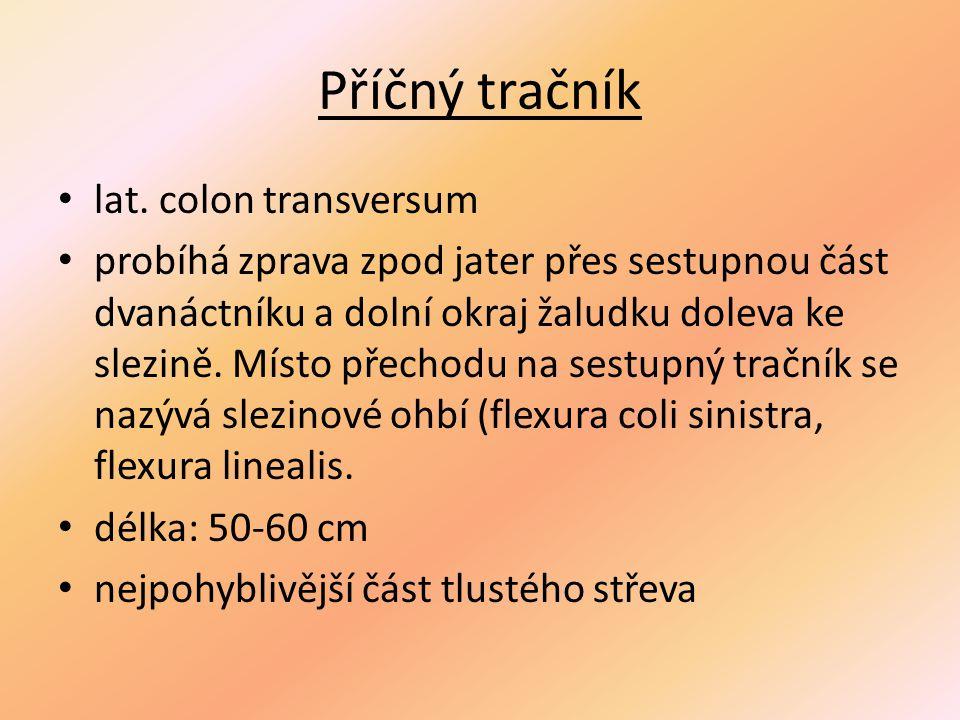 Příčný tračník lat.