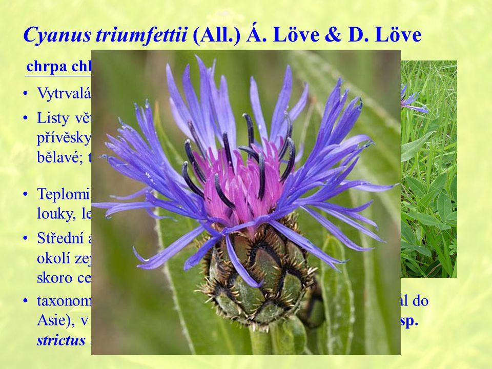 Cyanus triumfettii (All.) Á.Löve & D.