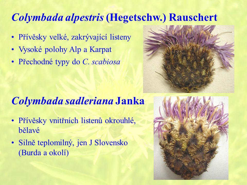 Colymbada alpestris (Hegetschw.) Rauschert Přívěsky velké, zakrývající listeny Vysoké polohy Alp a Karpat Přechodné typy do C.