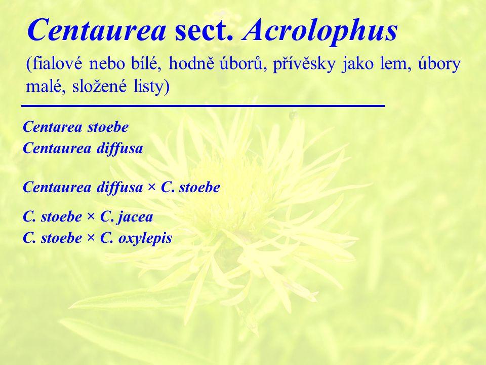 Centaurea sect.