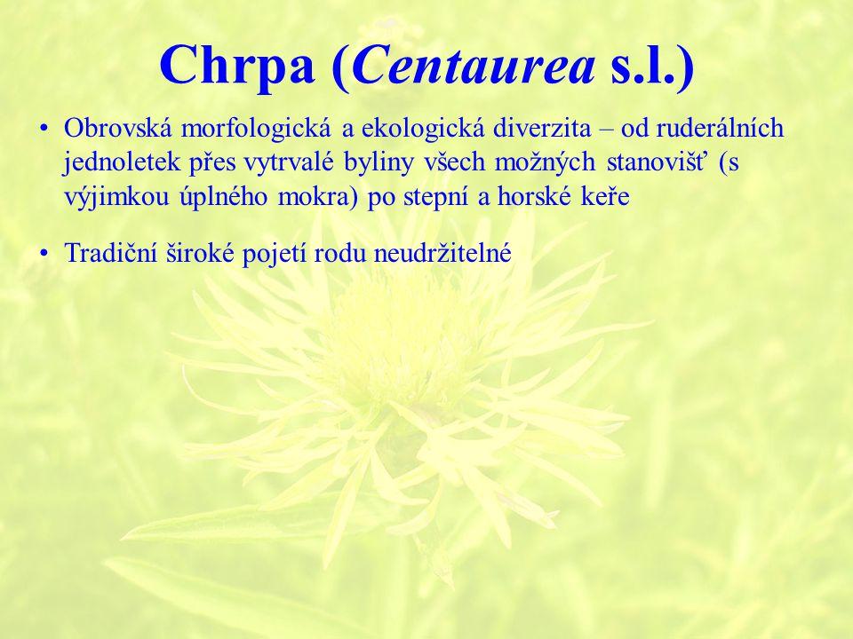 Chrpa (Centaurea s.l.) Tradiční široké pojetí rodu neudržitelné Obrovská morfologická a ekologická diverzita – od ruderálních jednoletek přes vytrvalé byliny všech možných stanovišť (s výjimkou úplného mokra) po stepní a horské keře