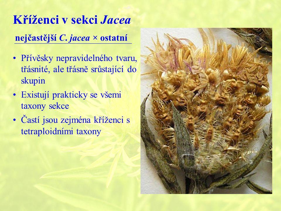 Kříženci v sekci Jacea nejčastější C.