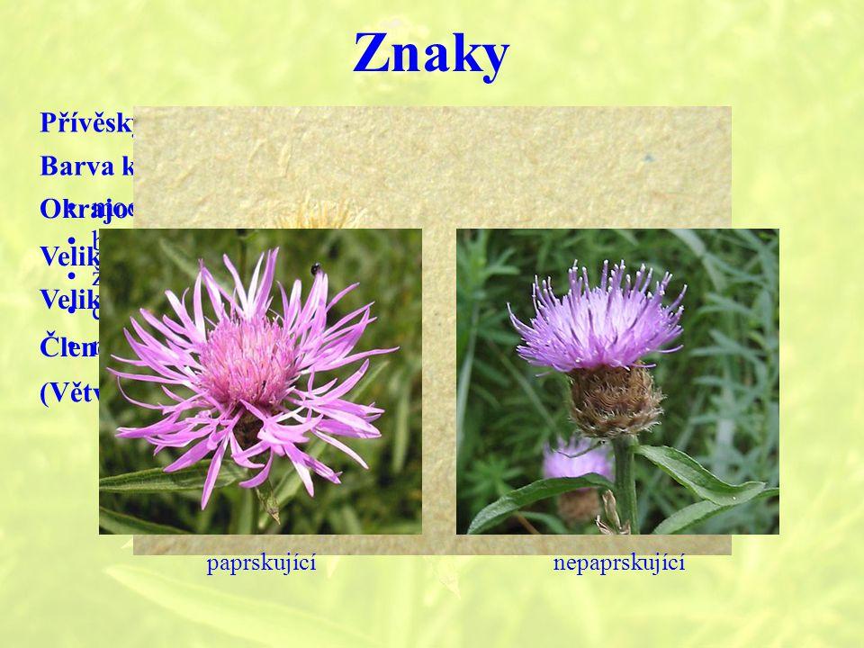 Znaky Přívěsky zákrovních listenů Barva květů modráCyanus bíláCentaurea diffusa žlutáostnité druhy - C.