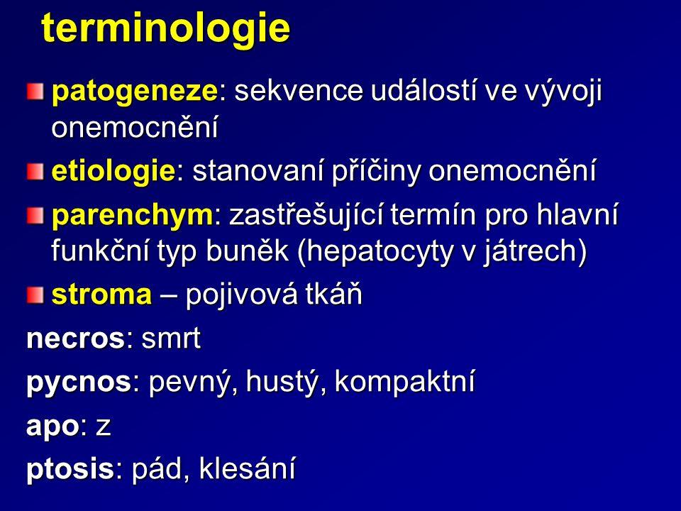 terminologie patogeneze: sekvence událostí ve vývoji onemocnění etiologie: stanovaní příčiny onemocnění parenchym: zastřešující termín pro hlavní funk