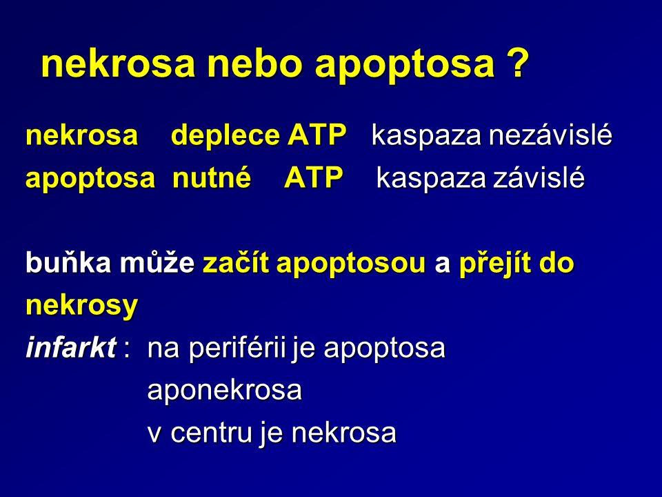 nekrosa nebo apoptosa ? nekrosa deplece ATP kaspaza nezávislé apoptosa nutné ATP kaspaza závislé buňka může začít apoptosou a přejít do nekrosy infark