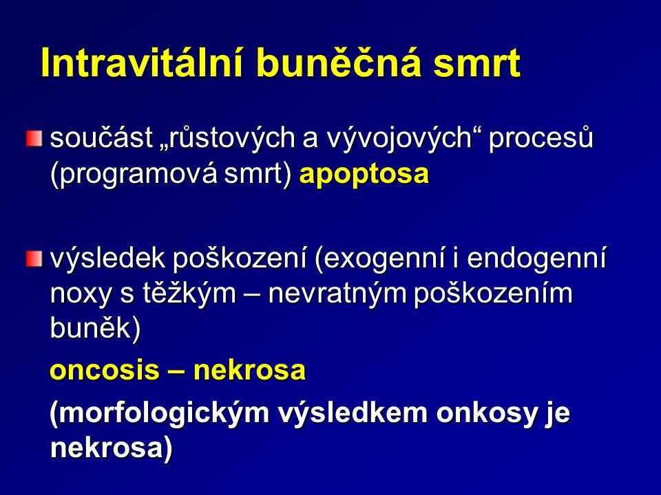 """Intravitální buněčná smrt součást """"růstových a vývojových"""" procesů (programová smrt) apoptosa výsledek poškození (exogenní i endogenní noxy s těžkým –"""