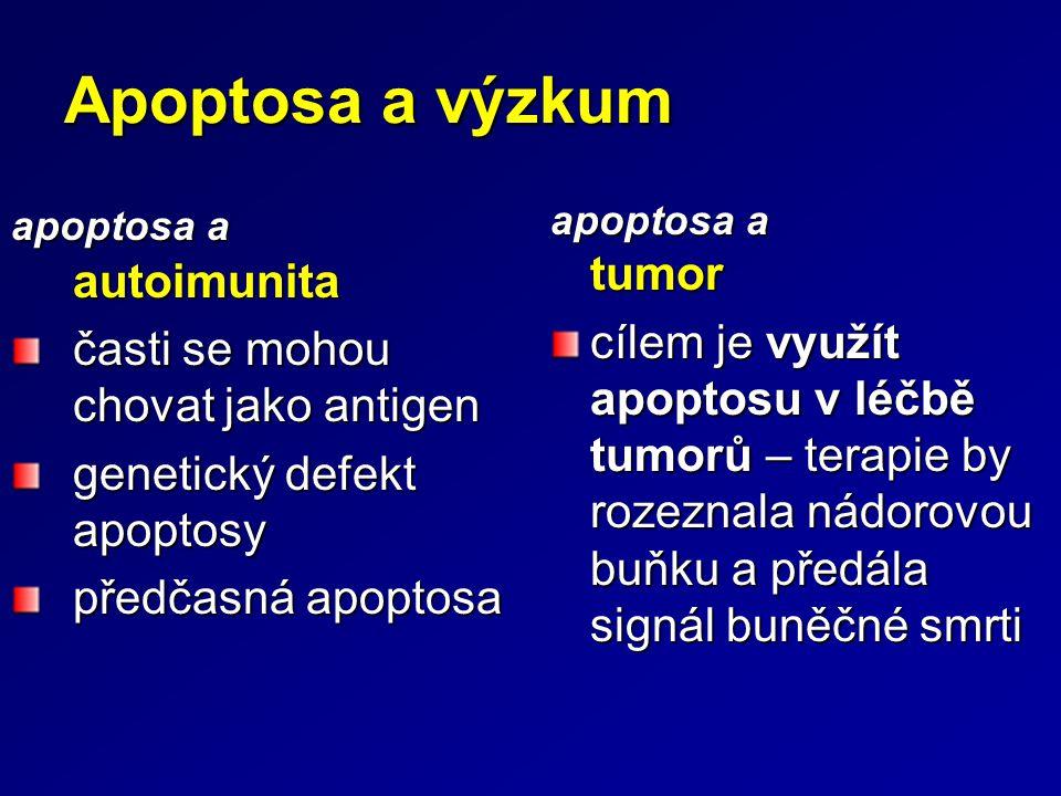 apoptosa a autoimunita časti se mohou chovat jako antigen genetický defekt apoptosy předčasná apoptosa apoptosa a tumor cílem je využít apoptosu v léč