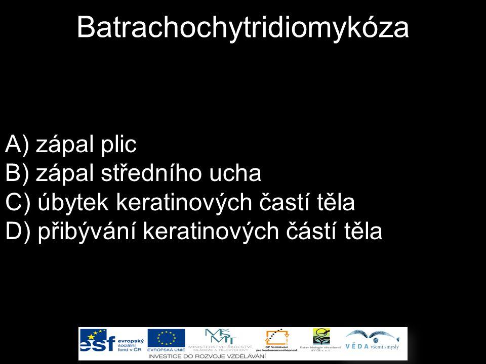 Batrachochytridiomykóza A) zápal plic B) zápal středního ucha C) úbytek keratinových častí těla D) přibývání keratinových částí těla