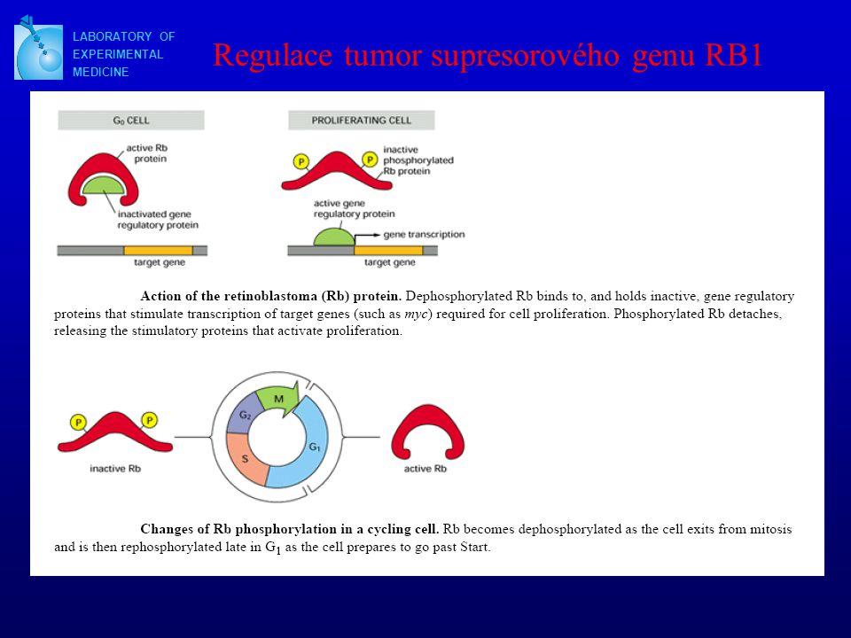 LABORATORY OF EXPERIMENTAL MEDICINE Regulace tumor supresorového genu RB1
