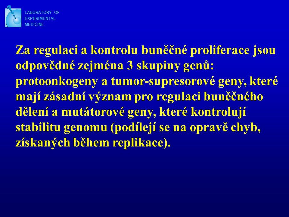 LABORATORY OF EXPERIMENTAL MEDICINE Za regulaci a kontrolu buněčné proliferace jsou odpovědné zejména 3 skupiny genů: protoonkogeny a tumor-supresorov