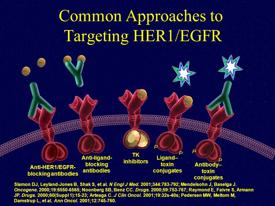 Common Approaches to Targeting HER1/EGFR Slamon DJ, Leyland-Jones B, Shak S, et al. N Engl J Med. 2001;344:783-792; Mendelsohn J, Baselga J. Oncogene.