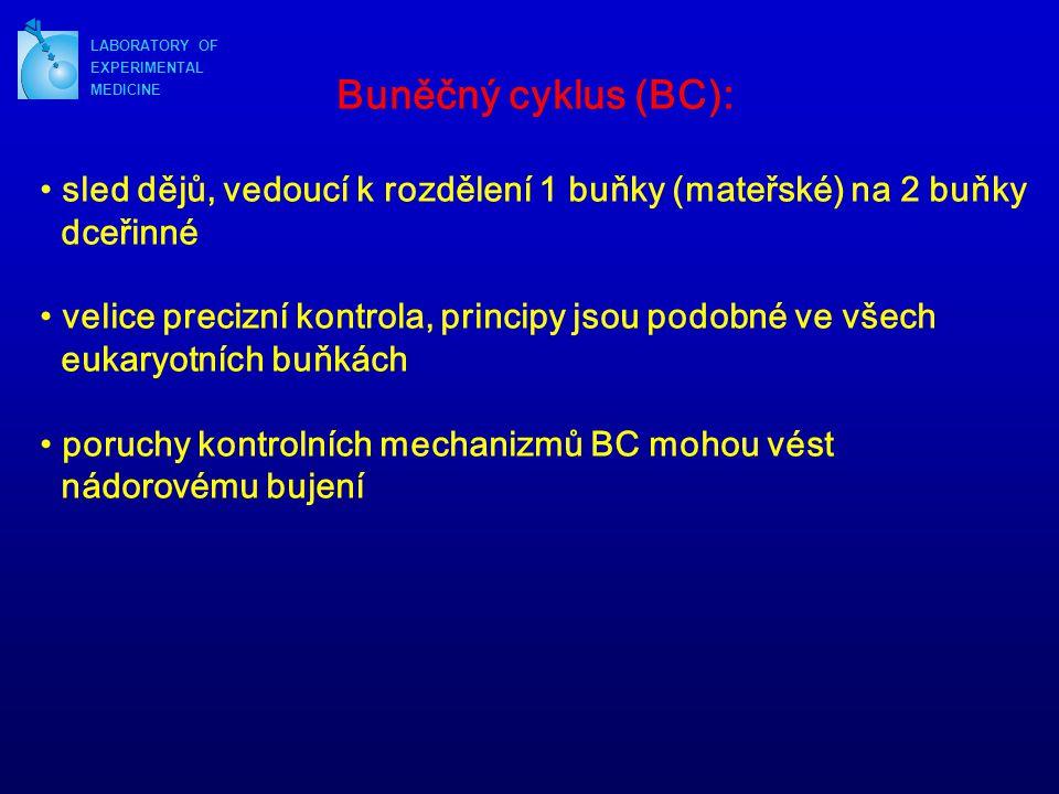 LABORATORY OF EXPERIMENTAL MEDICINE Buněčný cyklus (BC): sled dějů, vedoucí k rozdělení 1 buňky (mateřské) na 2 buňky dceřinné velice precizní kontrol