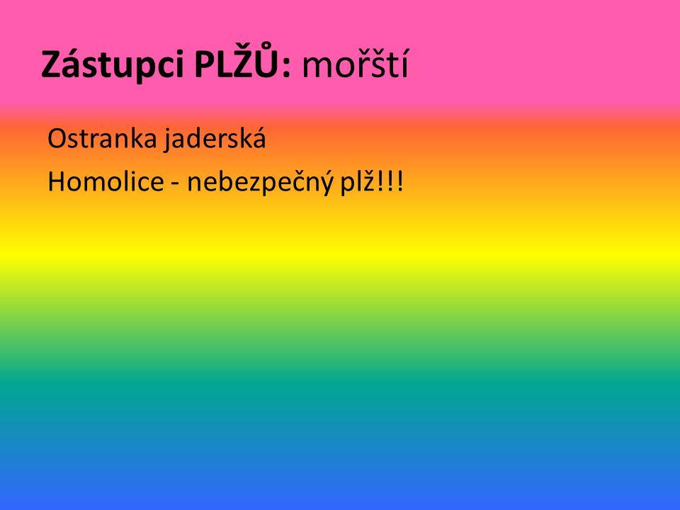 Zástupci PLŽŮ: mořští Ostranka jaderská Homolice - nebezpečný plž!!!