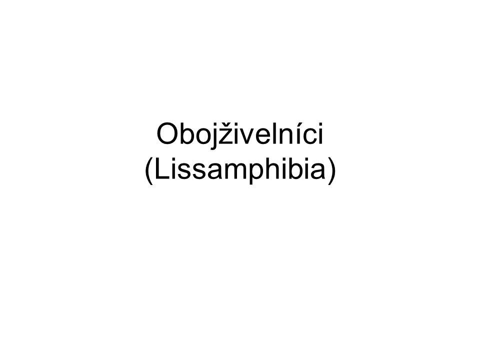 systém Nectridea (†) Amphibia Temnospondyla Eryopoidea (†) Dissorophoidea (†) Gymnophiona Amphibia Microsauria (†) Colosteidae (†) Urodela Anura Lissamhibia