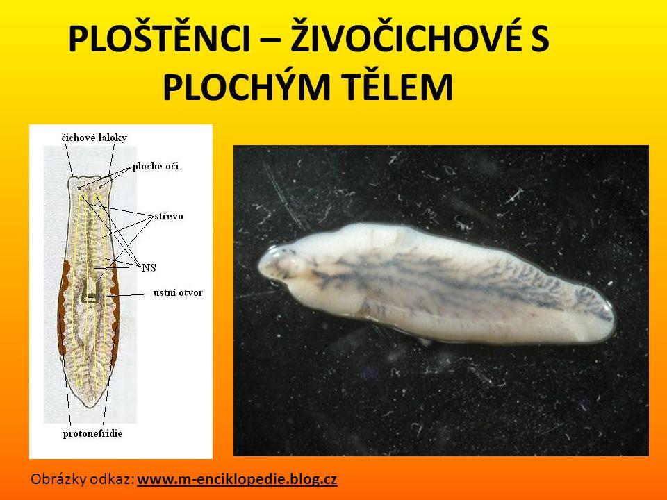 PLOŠTĚNCI – ŽIVOČICHOVÉ S PLOCHÝM TĚLEM die.blog.cz Obrázky odkaz: www.m-enciklopedie.blog.cz
