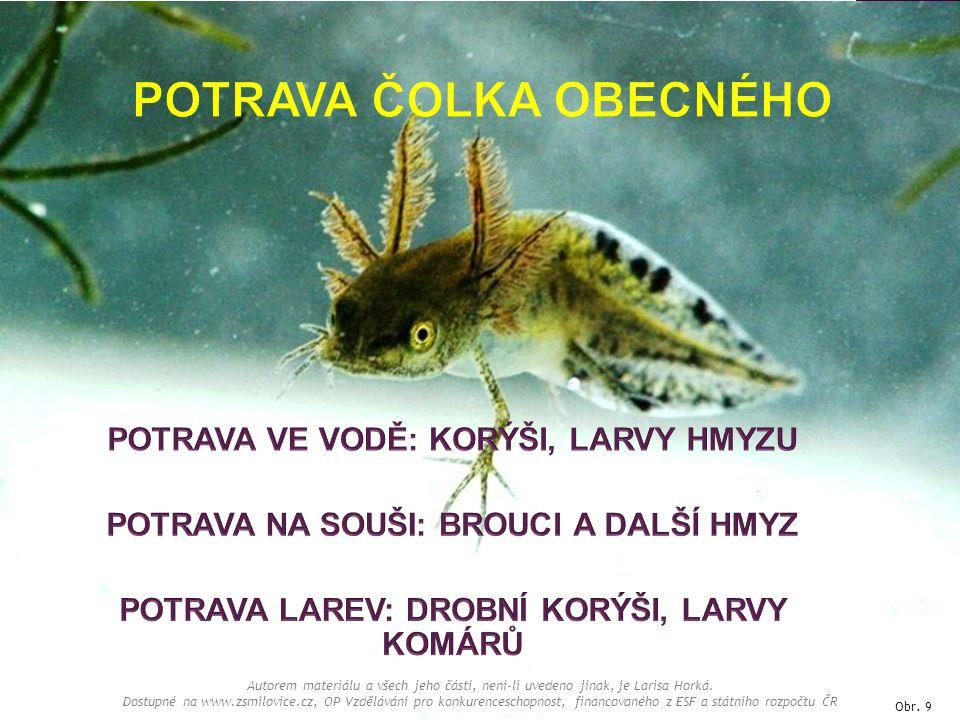 Obr. 9 Autorem materiálu a všech jeho částí, není-li uvedeno jinak, je Larisa Horká. Dostupné na www.zsmilovice.cz, OP Vzdělávání pro konkurenceschopn
