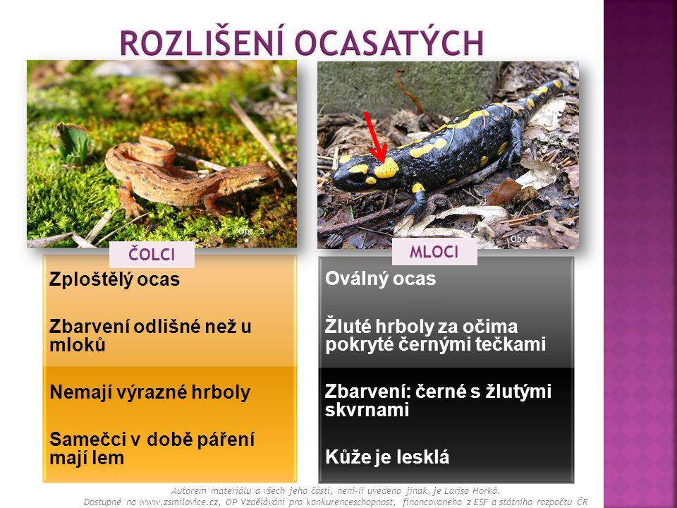Zploštělý ocas Zbarvení odlišné než u mloků Nemají výrazné hrboly Samečci v době páření mají lem Oválný ocas Žluté hrboly za očima pokryté černými teč
