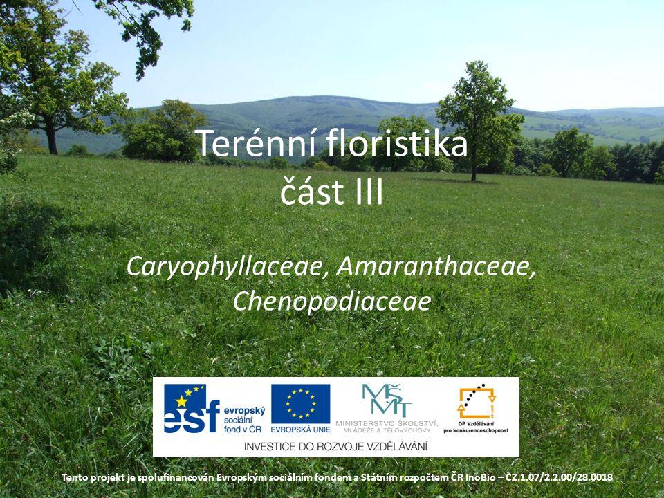 Terénní floristika část III Caryophyllaceae, Amaranthaceae, Chenopodiaceae Tento projekt je spolufinancován Evropským sociálním fondem a Státním rozpočtem ČR InoBio – CZ.1.07/2.2.00/28.0018