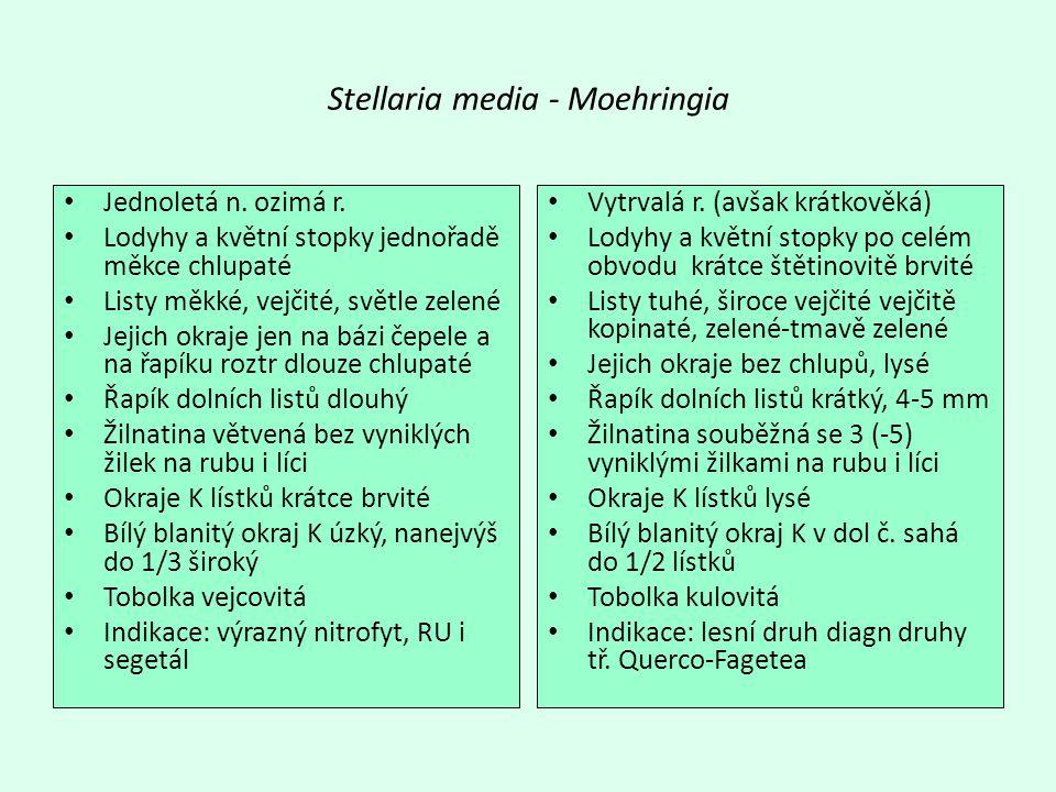Stellaria media - Moehringia Jednoletá n.ozimá r.