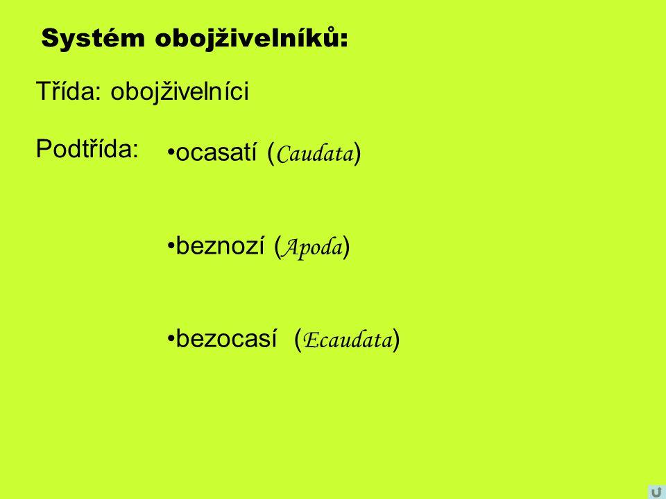 Systém obojživelníků: Třída: obojživelníci Podtřída: ocasatí ( Caudata ) beznozí ( Apoda ) bezocasí ( Ecaudata )