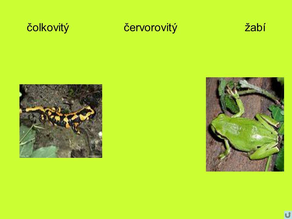 čolkovitý červorovitý žabí