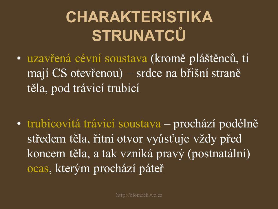 http://biomach.wz.cz SYSTÉM STRUNATCŮ 1.podkmen: PLÁŠTĚNCI –třídy: sumky, salpy, vršenky 2.