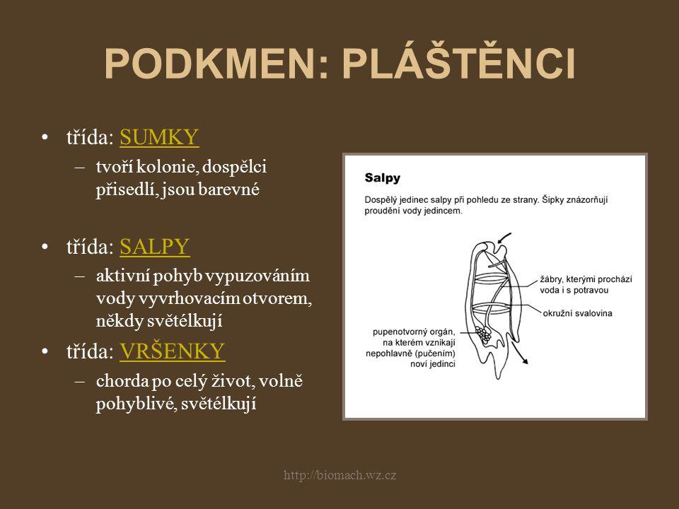 http://biomach.wz.cz PODKMEN: BEZLEBEČNÍ mořští, obývají písčité mělčiny znaky strunatců po celý život (chorda, NS) rybovité tělo, hřbetní a břišní ploutevní lem mohutný segmentovaný sval (na bocích pod jednovrstevnou pokožkou) nervová trubice v hlavové části mírně rozšířena (mozek a mícha nejsou rozlišeny) věnec brv kolem úst, mikrofágové (plankton)
