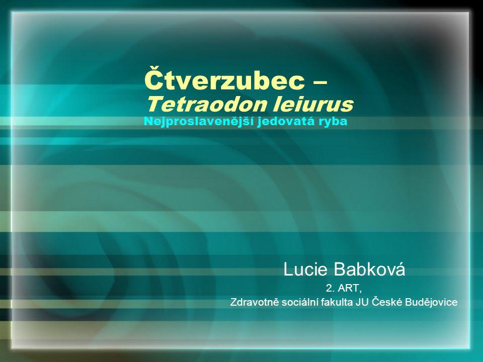 Čtverzubec – Tetraodon leiurus Nejproslavenější jedovatá ryba Lucie Babková 2. ART, Zdravotně sociální fakulta JU České Budějovice