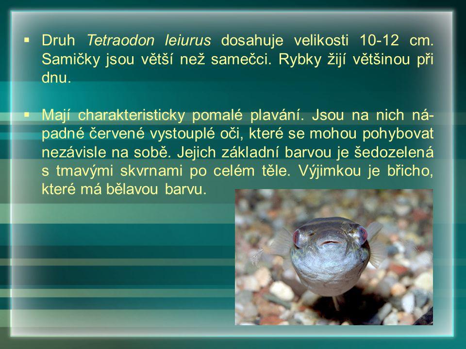  Maso těchto ryb je většinou jedovaté, jed charakteristic- ký pro tuto čeleď se nazývá tetrodotoxin.