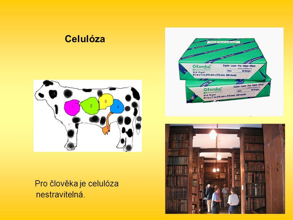 Celulóza Pro člověka je celulóza nestravitelná.