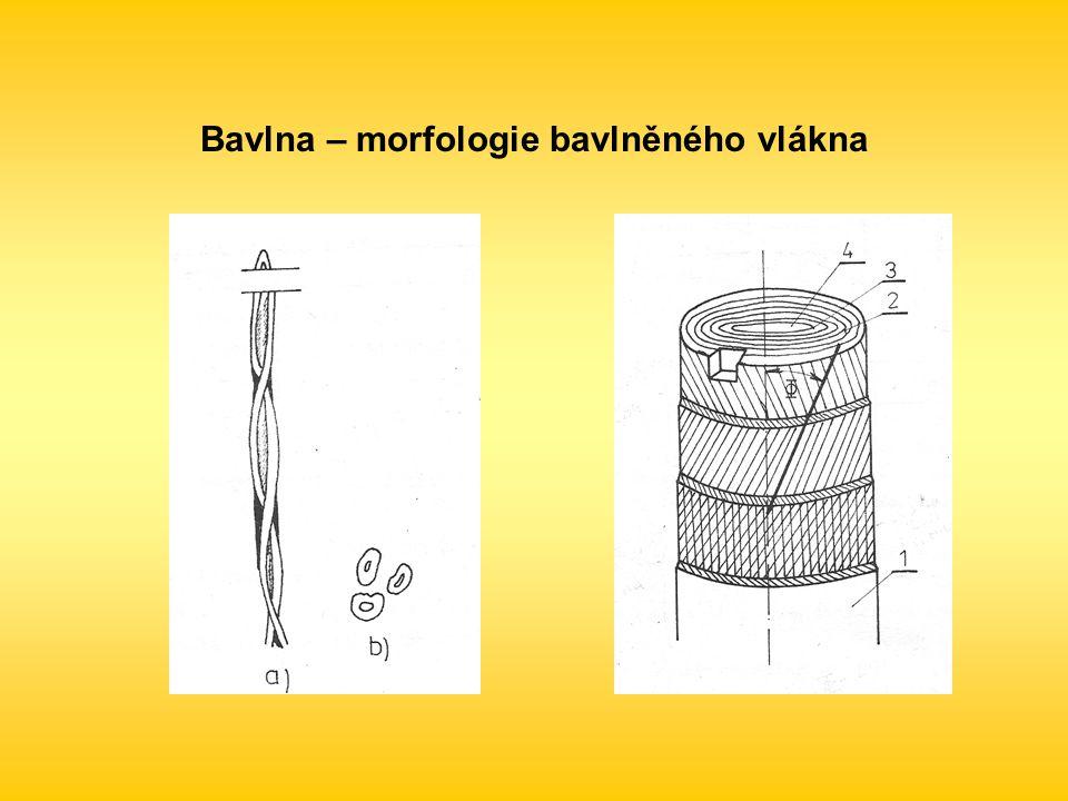 Bavlna – morfologie bavlněného vlákna