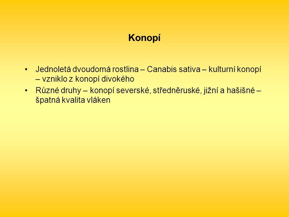 Jednoletá dvoudomá rostlina – Canabis sativa – kulturní konopí – vzniklo z konopí divokého Různé druhy – konopí severské, středněruské, jižní a hašišné – špatná kvalita vláken
