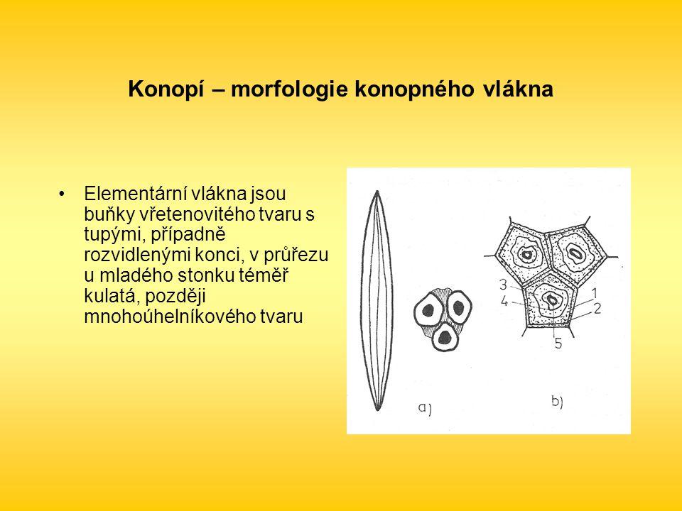 Konopí – morfologie konopného vlákna Elementární vlákna jsou buňky vřetenovitého tvaru s tupými, případně rozvidlenými konci, v průřezu u mladého stonku téměř kulatá, později mnohoúhelníkového tvaru