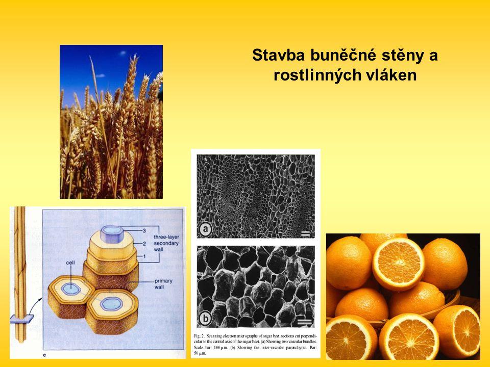 Stavba buněčné stěny a rostlinných vláken