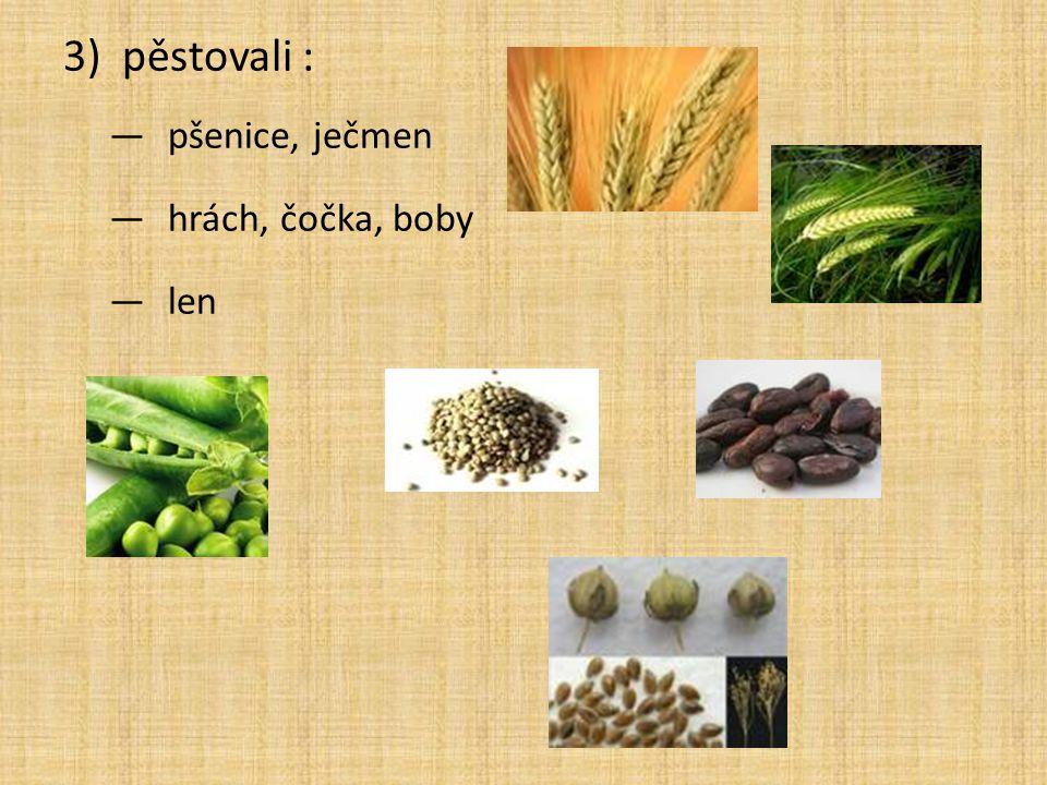 3)pěstovali : —pšenice, ječmen —hrách, čočka, boby —len