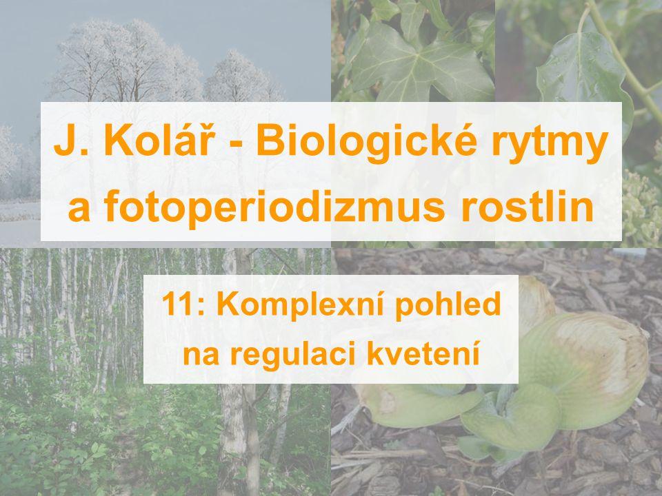 J. Kolář - Biologické rytmy a fotoperiodizmus rostlin 11: Komplexní pohled na regulaci kvetení