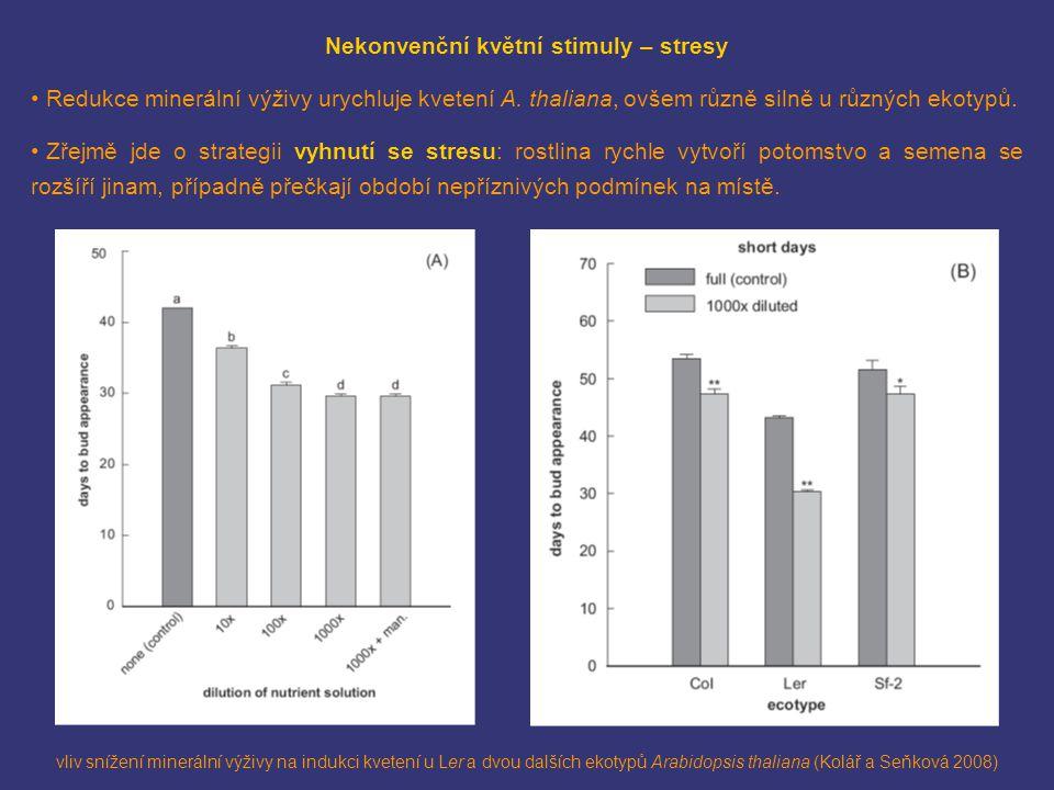 vliv snížení minerální výživy na indukci kvetení u Ler a dvou dalších ekotypů Arabidopsis thaliana (Kolář a Seňková 2008) Nekonvenční květní stimuly – stresy Redukce minerální výživy urychluje kvetení A.