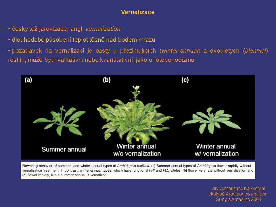 vliv vernalizace na kvetení ekotypů Arabidopsis thaliana, Sung a Amasino 2004 Vernalizace česky též jarovizace, angl.