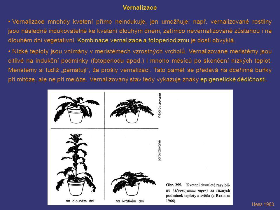 Vernalizace Vernalizace mnohdy kvetení přímo neindukuje, jen umožňuje: např. vernalizované rostliny jsou následně indukovatelné ke kvetení dlouhým dne