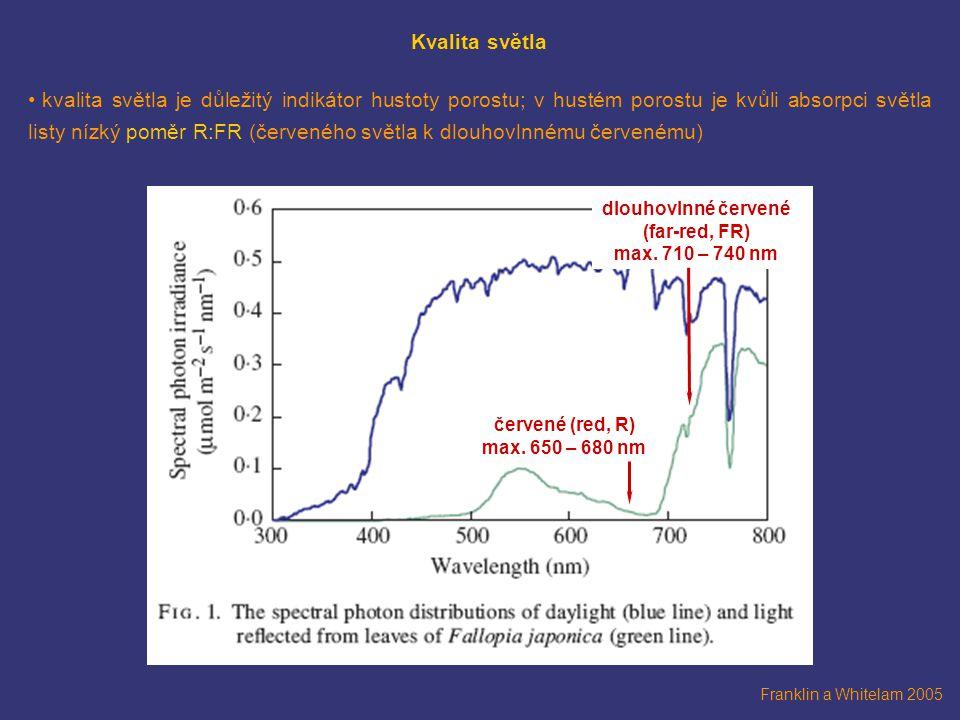 Franklin a Whitelam 2005 Kvalita světla kvalita světla je důležitý indikátor hustoty porostu; v hustém porostu je kvůli absorpci světla listy nízký poměr R:FR (červeného světla k dlouhovlnnému červenému) červené (red, R) max.