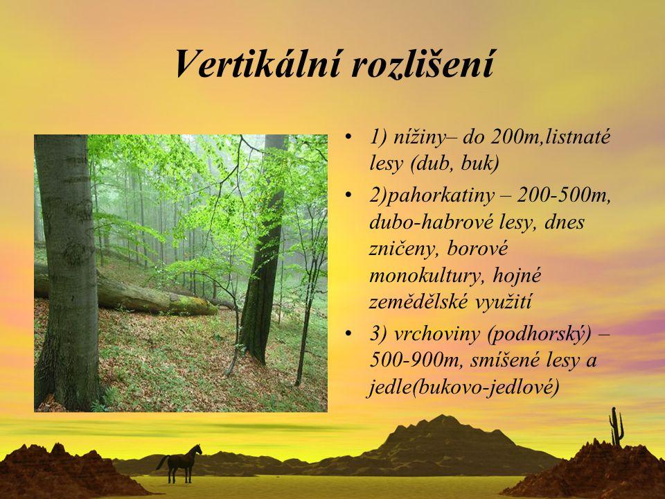 Vertikální rozlišení 1) nížiny– do 200m,listnaté lesy (dub, buk) 2)pahorkatiny – 200-500m, dubo-habrové lesy, dnes zničeny, borové monokultury, hojné
