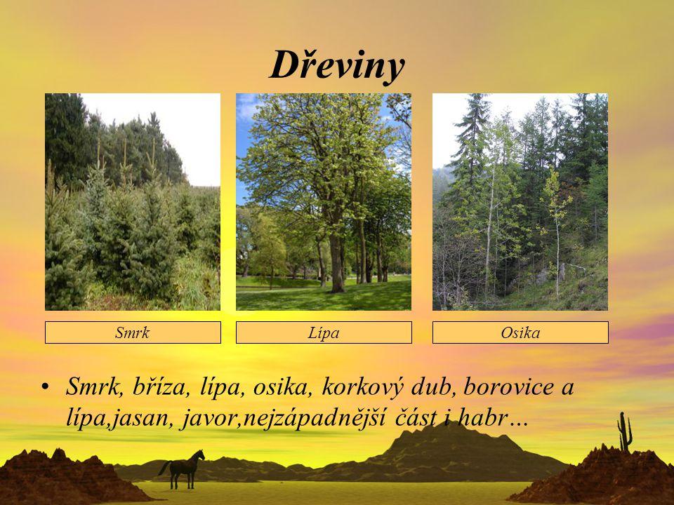 Dřeviny Smrk, bříza, lípa, osika, korkový dub, borovice a lípa,jasan, javor,nejzápadnější část i habr… SmrkLípaOsika