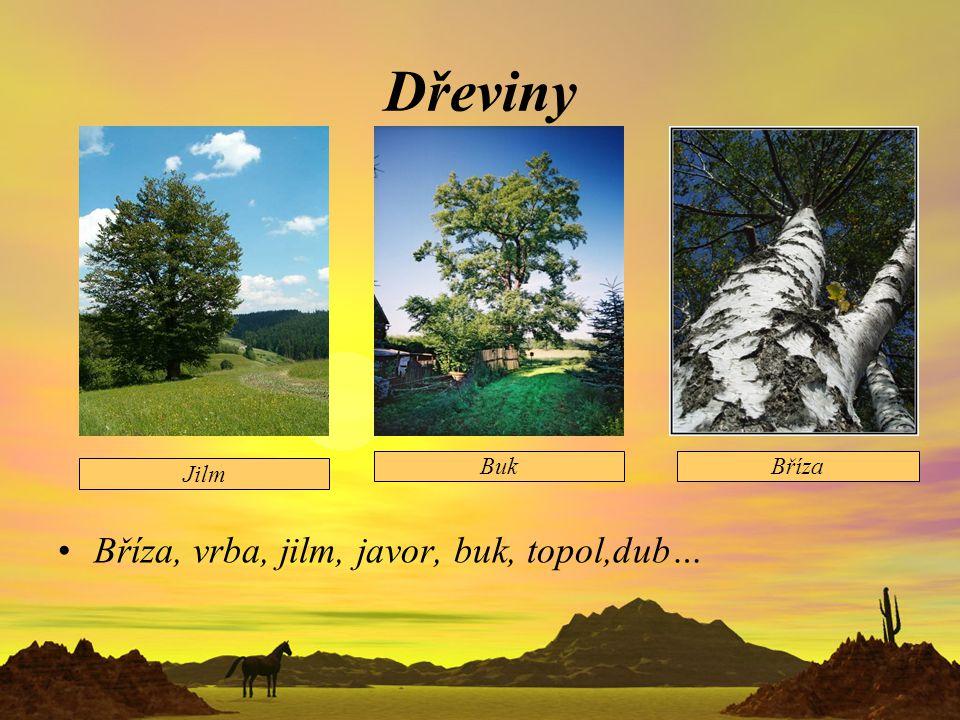 Dřeviny Bříza, vrba, jilm, javor, buk, topol,dub… Jilm BukBříza